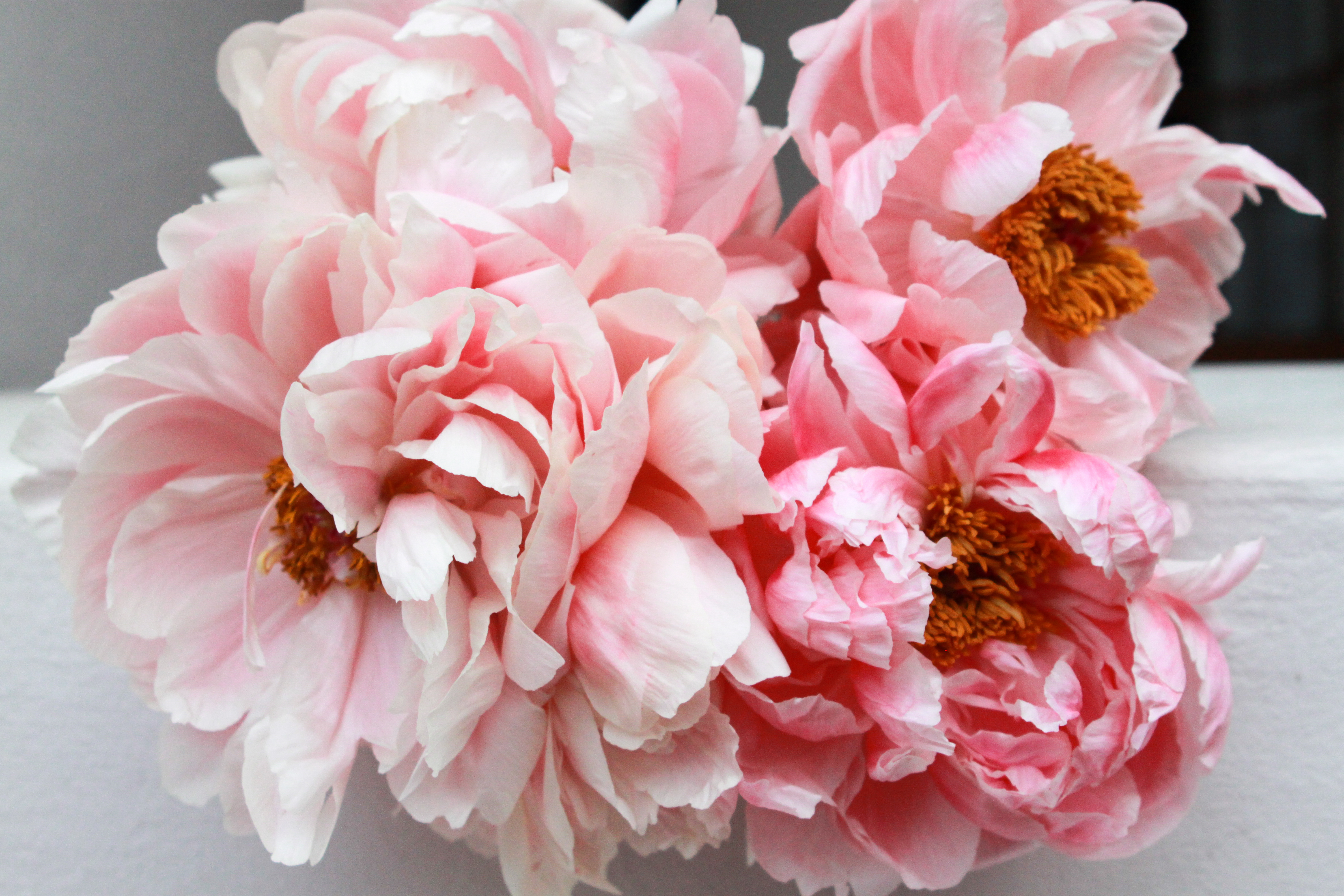 coral charm peonies, cape town wedding florist